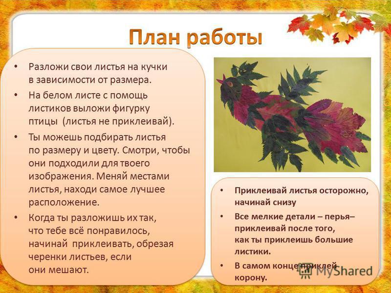 Разложи свои листья на кучки в зависимости от размера. На белом листе с помощь листиков выложи фигурку птицы (листья не приклеивай). Ты можешь подбирать листья по размеру и цвету. Смотри, чтобы они подходили для твоего изображения. Меняй местами лист