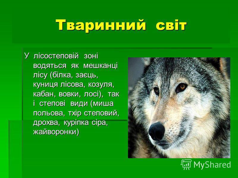 Тваринний світ У лісостеповій зоні водяться як мешканці лісу (білка, заєць, куниця лісова, козуля, кабан, вовки, лосі), так і степові види (миша польова, тхір степовий, дрохва, куріпка сіра, жайворонки)