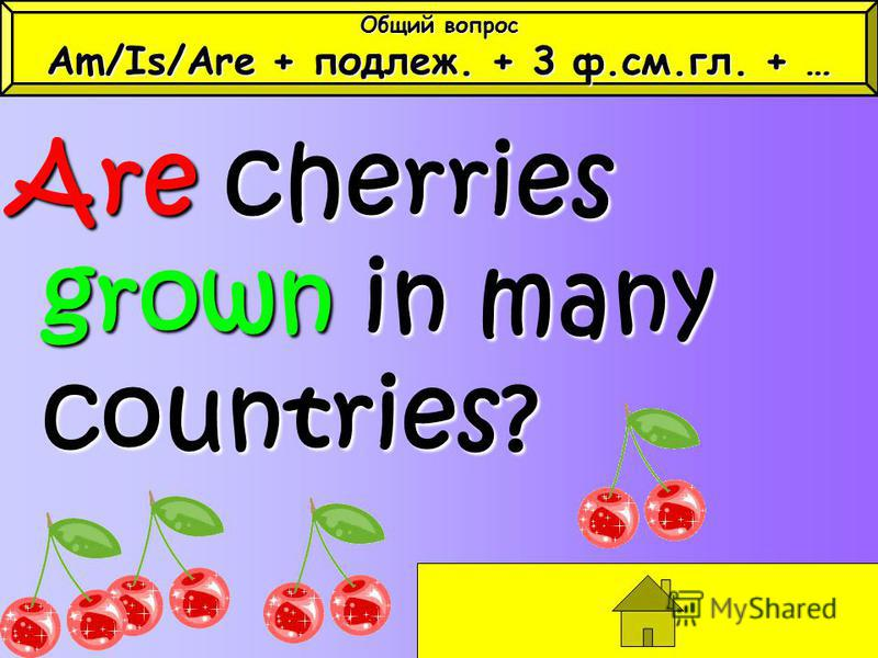 Are cherries grown in many countries? Общий вопрос Am/Is/Are + подлеж. + 3 ф.см.гл. + …