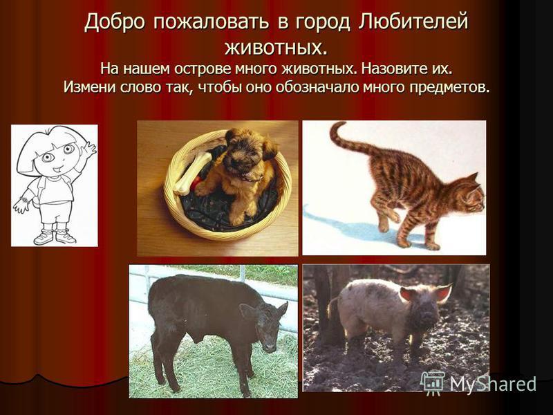 Добро пожаловать в город Любителей животных. На нашем острове много животных. Назовите их. Измени слово так, чтобы оно обозначало много предметов.