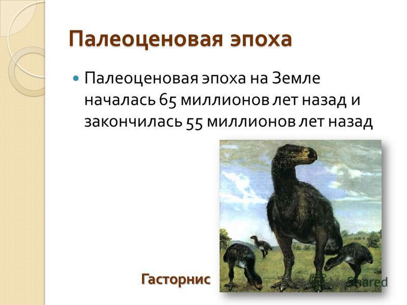Палеоценовая эпоха Палеоценовая эпоха на Земле началась 65 миллионов лет назад и закончилась 55 миллионов лет назад Гасторнис