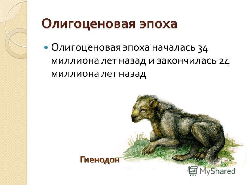 Олигоценовая эпоха Олигоценовая эпоха началась 34 миллиона лет назад и закончилась 24 миллиона лет назад Гиенодон