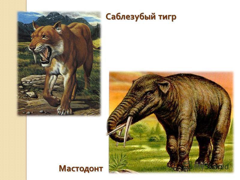 Саблезубый тигр Мастодонт