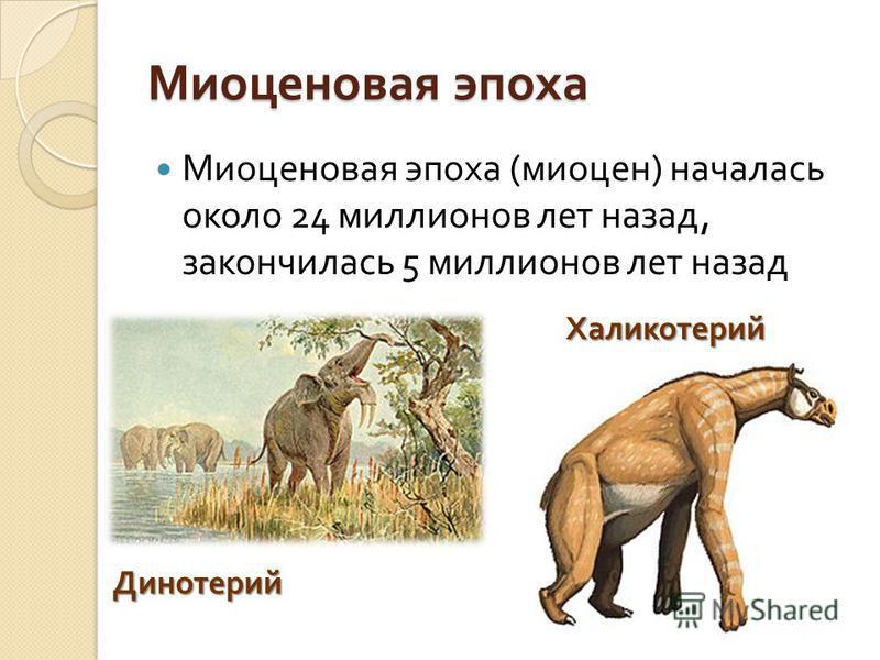 Миоценовая эпоха Миоценовая эпоха ( миоцен ) началась около 24 миллионов лет назад, закончилась 5 миллионов лет назад Динотерий Халикотерий