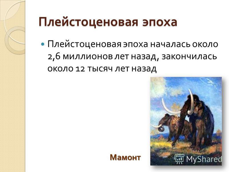 Плейстоценовая эпоха Плейстоценовая эпоха началась около 2,6 миллионов лет назад, закончилась около 12 тысяч лет назад Мамонт