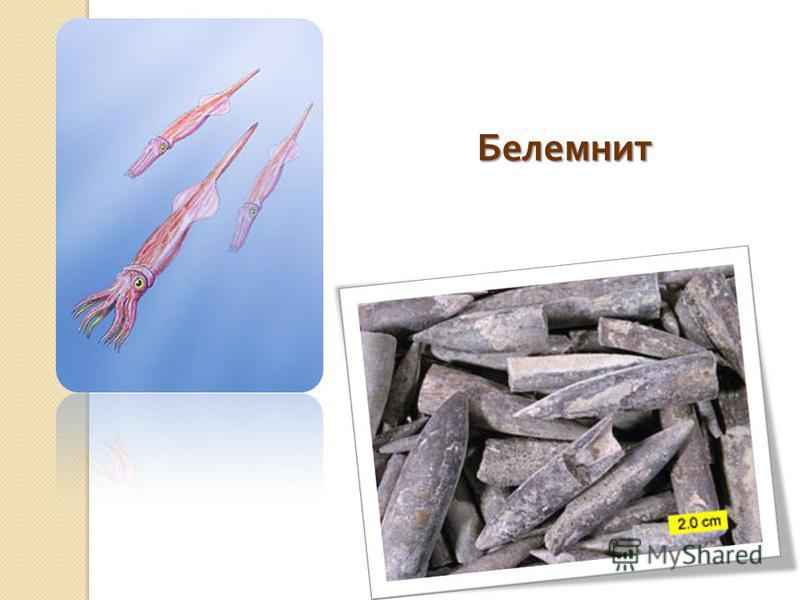 Белемнит