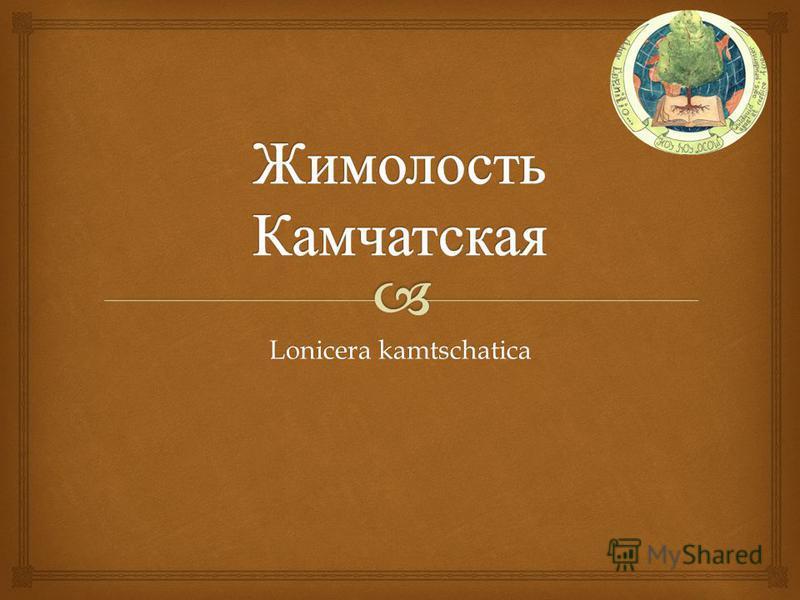 Lonicera kamtschatica