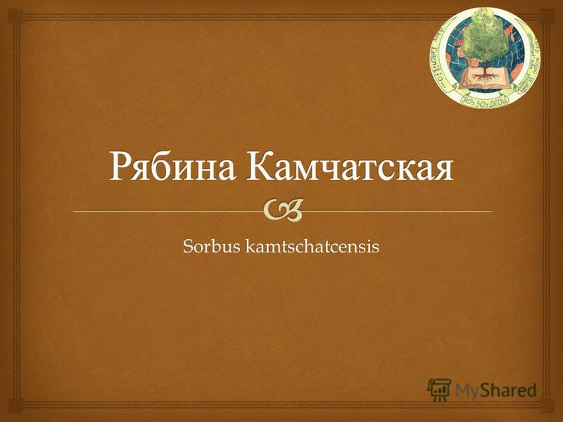 Sorbus kamtschatcensis