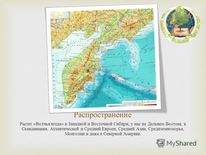 Распространение Растет « Волчья ягода » в Западной и Восточной Сибири, у нас на Дальнем Востоке, в Скандинавии, Атлантической и Средней Европе, Средней Азии, Средиземноморье, Монголии и даже в Северной Америке.