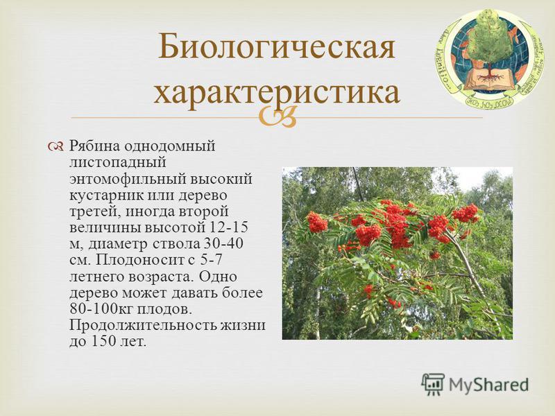 Биологическая характеристика Рябина однодомный листопадный энтомофильный высокий кустарник или дерево третей, иногда второй величины высотой 12-15 м, диаметр ствола 30-40 см. Плодоносит с 5-7 летнего возраста. Одно дерево может давать более 80-100 кг