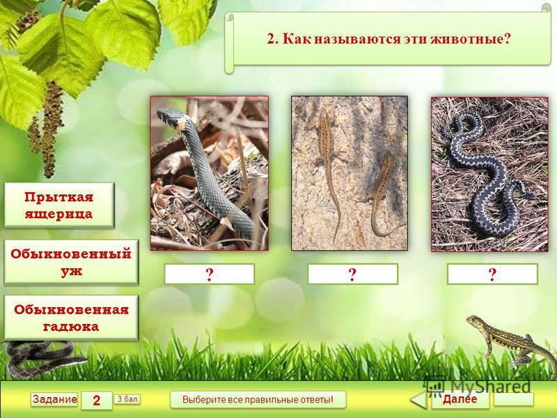 Далее 2 2 Задание 3 бал. Выберите все правильные ответы! ??? 2. Как называются эти животные? Прыткая ящерица Прыткая ящерица Обыкновенный уж Обыкновенный уж Обыкновенная гадюка Обыкновенная гадюка