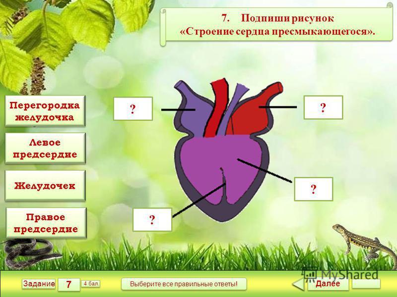 Далее 7 7 Задание 4 бал. Выберите все правильные ответы! ? ? ? ? 7. Подпиши рисунок «Строение сердца пресмыкающегося». 7. Подпиши рисунок «Строение сердца пресмыкающегося». Перегородка желудочка Перегородка желудочка Правое предсердие Правое предсерд