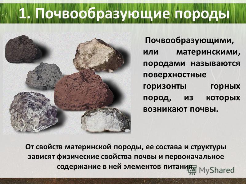 1. Почвообразующие породы Почвообразующими, или материнскими, породами называются поверхностные горизонты горных пород, из которых возникают почвы. От свойств материнской породы, ее состава и структуры зависят физические свойства почвы и первоначальн