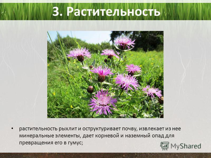 3. Растительность растительность рыхлит и оструктуривает почву, извлекает из нее минеральные элементы, дает корневой и наземный опад для превращения его в гумус;