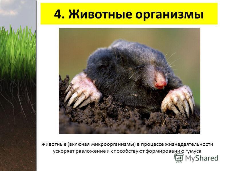 4. Животные организмы животные (включая микроорганизмы) в процессе жизнедеятельности ускоряет разложение и способствуют формированию гумуса