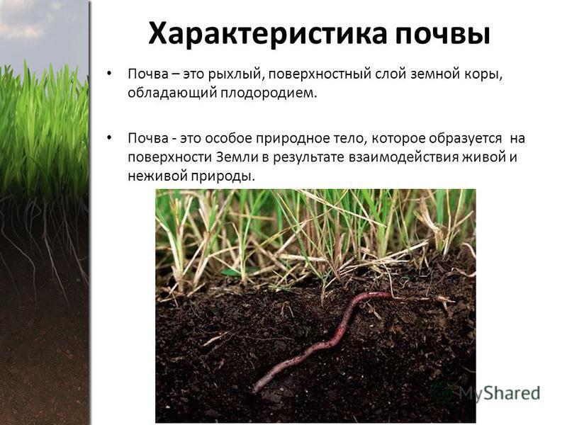 Характеристика почвы Почва – это рыхлый, поверхностный слой земной коры, обладающий плодородием. Почва - это особое природное тело, которое образуется на поверхности Земли в результате взаимодействия живой и неживой природы.