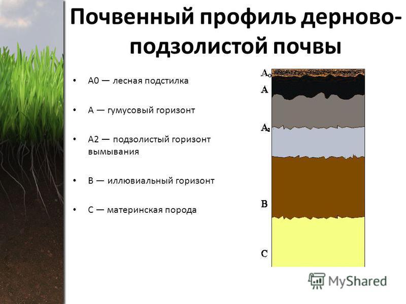 Почвенный профиль дерново- подзолистой почвы А0 лесная подстилка А гумусовый горизонт А2 подзолистый горизонт вымывания В иллювиальный горизонт С материнская порода