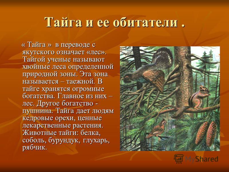 Тайга и ее обитатели. « Тайга » в переводе с якутского означает «лес». Тайгой ученые называют хвойные леса определенной природной зоны. Эта зона называется – таежной. В тайге хранятся огромные богатства. Главное из них – лес. Другое богатство - пушни