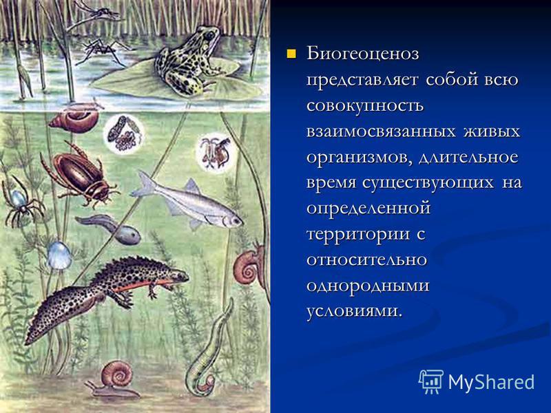 Биогеоценоз представляет собой всю совокупность взаимосвязанных живых организмов, длительное время существующих на определенной территории с относительно однородными условиями.