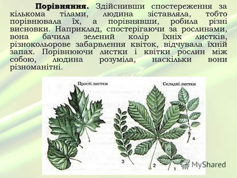 Порівняння. Порівняння. Здійснивши спостереження за кількома тілами, людина зіставляла, тобто порівнювала їх, а порівнявши, робила різні висновки. Наприклад, спостерігаючи за рослинами, вона бачила зелений колір їхніх листків, різнокольорове забарвле