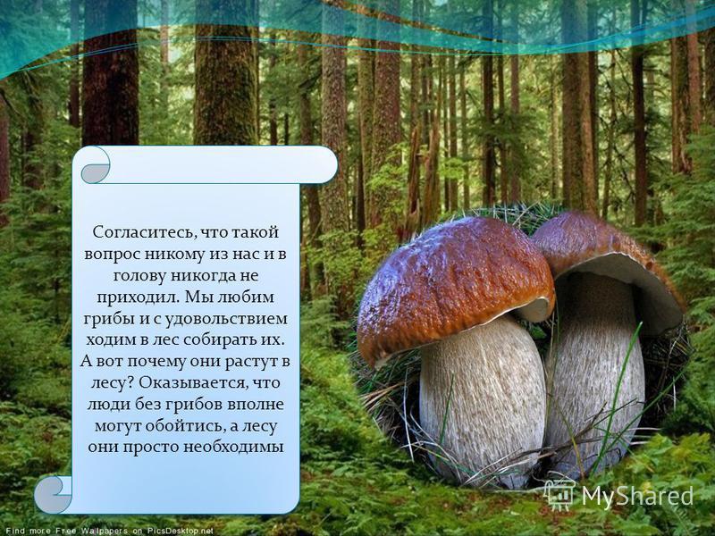 Меня всегда интересовал вопрос: Нужны ли лесу грибы? Меня всегда интересовал вопрос: Нужны ли лесу грибы?