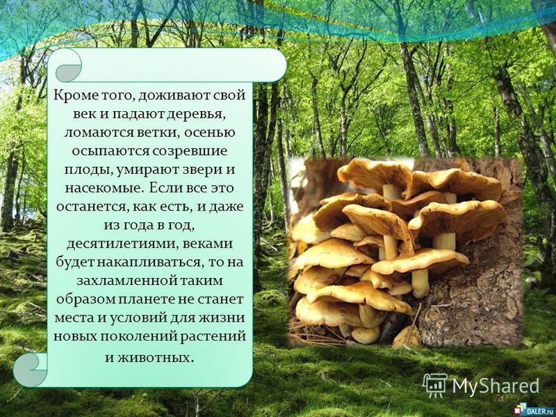 В лесу только за счет опавших листьев ежегодно скапливается свыше двух тонн перегнивших веществ на каждый гектар лесных угодий