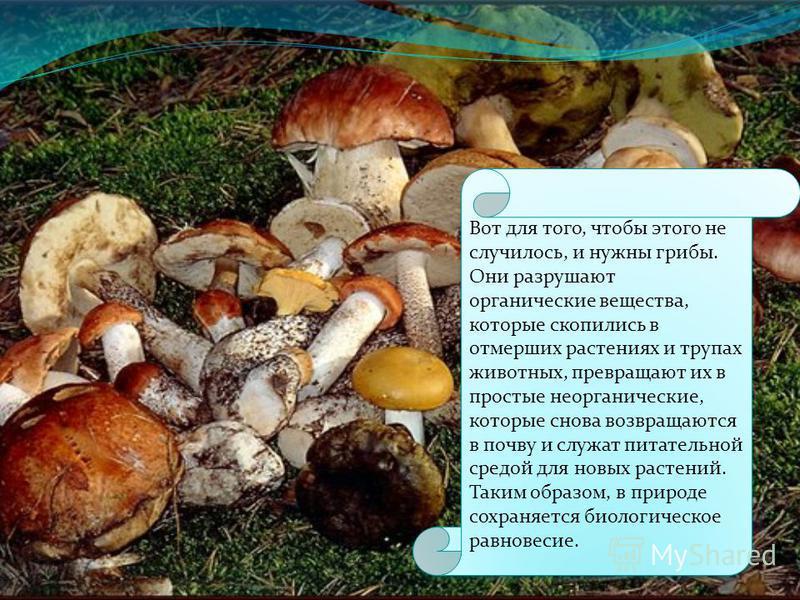 Истощится и почва, потому что питательные вещества не будут возвращаться в нее, они так и останутся в неперегнивших растениях и животных.