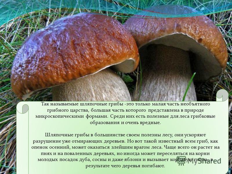 Вот для того, чтобы этого не случилось, и нужны грибы. Они разрушают органические вещества, которые скопились в отмерших растениях и трупах животных, превращают их в простые неорганические, которые снова возвращаются в почву и служат питательной сред