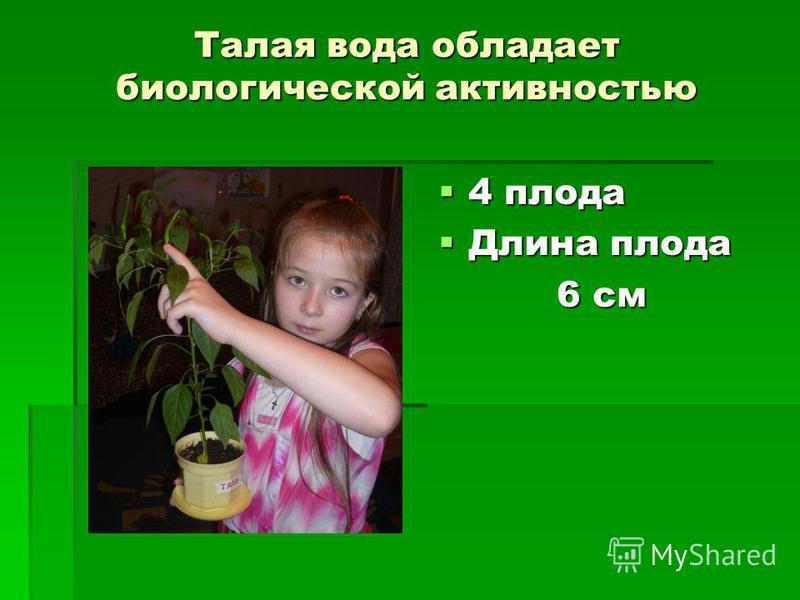 Талая вода обладает биологической активностью 4 плода 4 плода Длина плода Длина плода 6 см