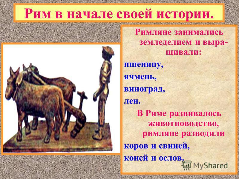 Рим в начале своей истории. Римляне занимались земледелием и выращивали: пшеницу, ячмень, виноград, лен. В Риме развивалось животноводство, римляне разводили коров и свиней, коней и ослов.