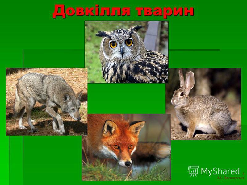 Довкілля тварин 3 А.С. Василевська