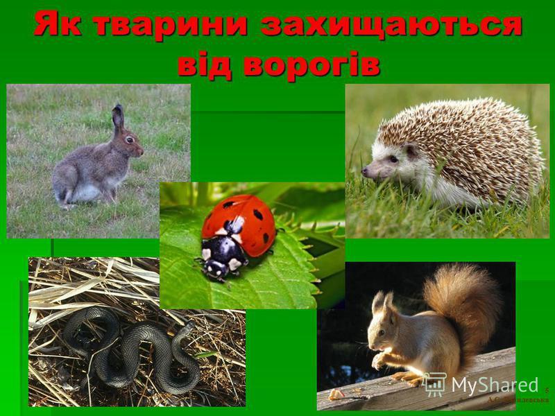Як тварини захищаються від ворогів 5 А.С. Василевська