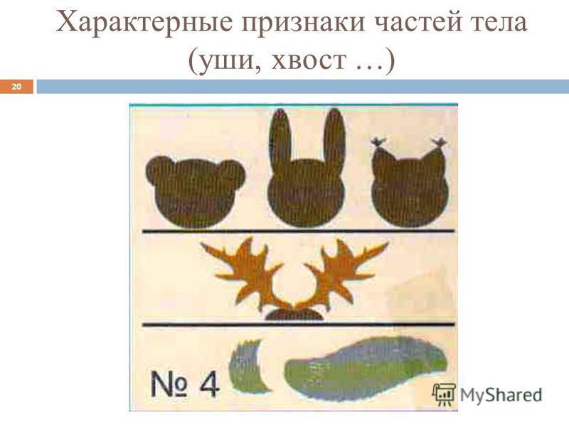 Характерные признаки частей тела (уши, хвост …) 20
