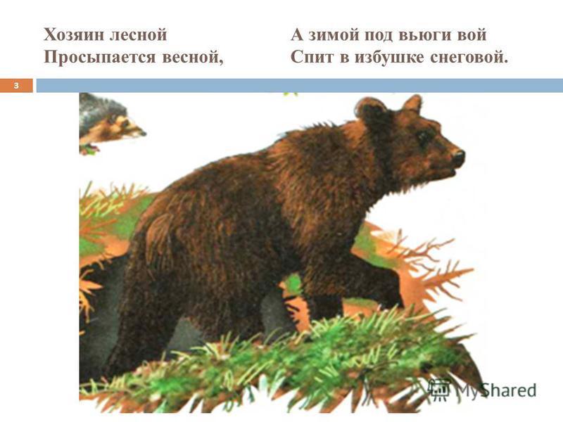 Хозяин лесной А зимой под вьюги вой Просыпается весной, Спит в избушке снеговой. 3