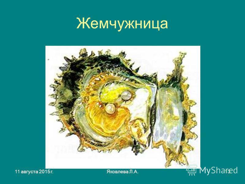 11 августа 2015 г.Яковлева Л.А.13 Жемчужница