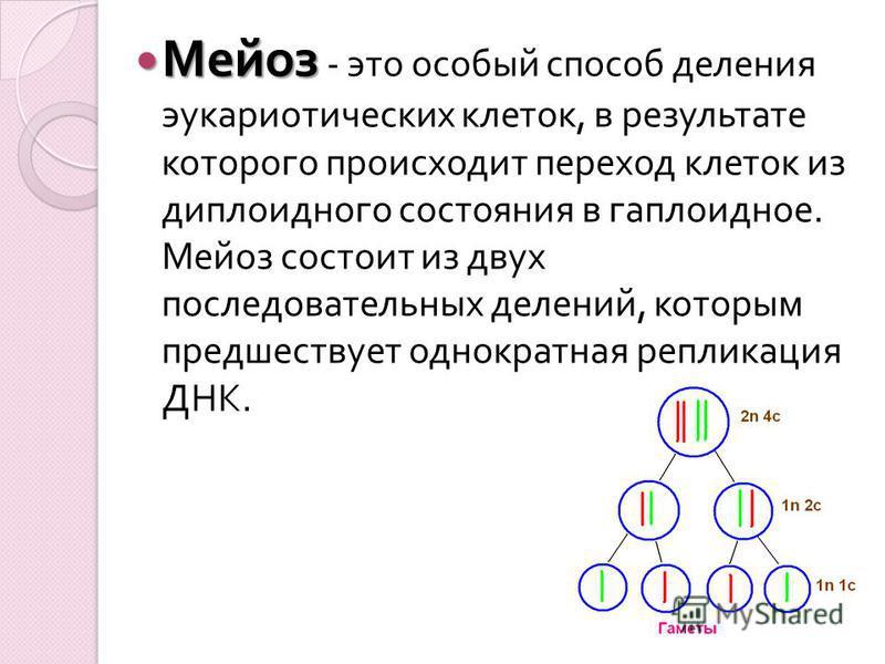 Мейоз Мейоз - это особый способ деления эукариотических клеток, в результате которого происходит переход клеток из диплоидного состояния в гаплоидное. Мейоз состоит из двух последовательных делений, которым предшествует однократная репликация ДНК.