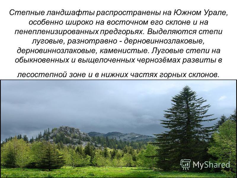 Степные ландшафты распространены на Южном Урале, особенно широко на восточном его склоне и на пенепленизированных предгорьях. Выделяются степи луговые, разнотравно - дерновиннозлаковые, дерновиннозлаковые, каменистые. Луговые степи на обыкновенных и