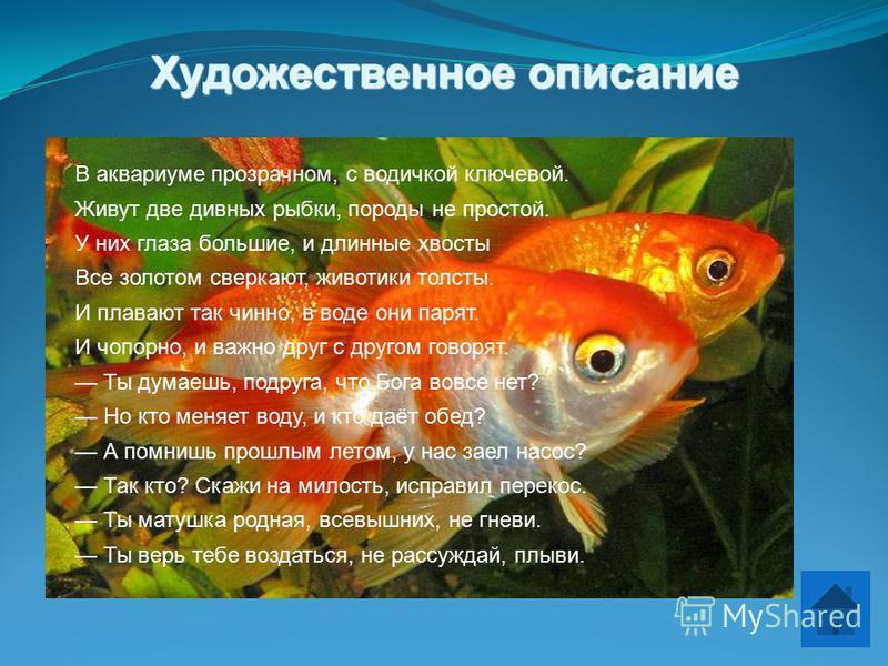 Художественное описание В аквариуме прозрачном, с водичкой ключевой. Живут две дивных рыбки, породы не простой. У них глаза большие, и длинные хвосты Все золотом сверкают, животики толсты. И плавают так чинно, в воде они парят. И чопорно, и важно дру