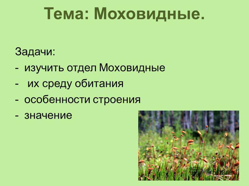 Тема: Моховидные. Задачи: -изучить отдел Моховидные - их среду обитания -особенности строения -значение