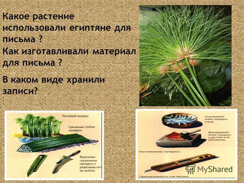 Какое растение использовали египтяне для письма ? Как изготавливали материал для письма ? В каком виде хранили записи?