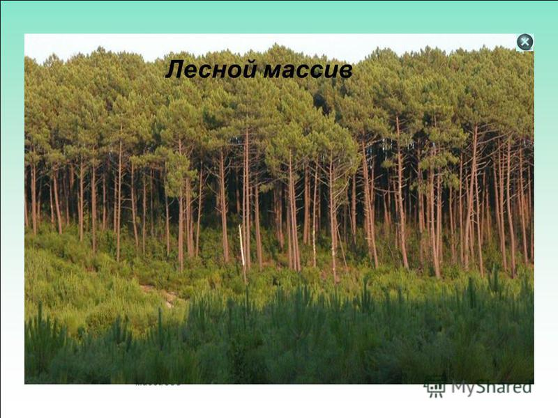Массивы бывают и а также в Турбо Паскале они числовые Определение массивов Этапы решения задач на массивы Задачи на обработку массивов Лесной массив