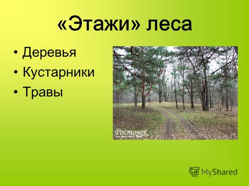 «Этажи» леса Деревья Кустарники Травы