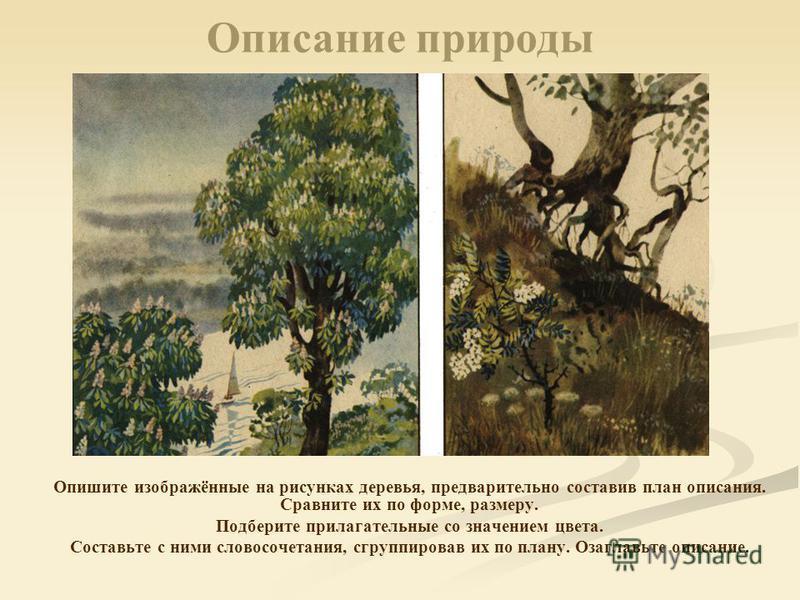 Описание природы Опишите изображённые на рисунках деревья, предварительно составив план описания. Сравните их по форме, размеру. Подберите прилагательные со значением цвета. Составьте с ними словосочетания, сгруппировав их по плану. Озаглавьте описан