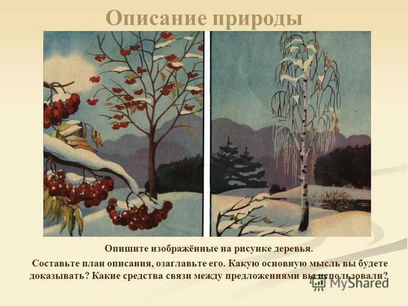 Описание природы Опишите изображённые на рисунке деревья. Составьте план описания, озаглавьте его. Какую основную мысль вы будете доказывать? Какие средства связи между предложениями вы использовали?