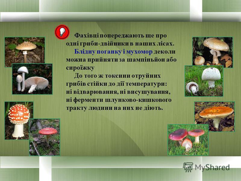 Фахівці попереджають ще про одні гриби-двійники в наших лісах. Блідну поганку і мухомор деколи можна прийняти за шампіньйон або сироїжку До того ж токсини отруйних грибів стійки до дії температури: ні відварювання, ні висушування, ні ферменти шлунков