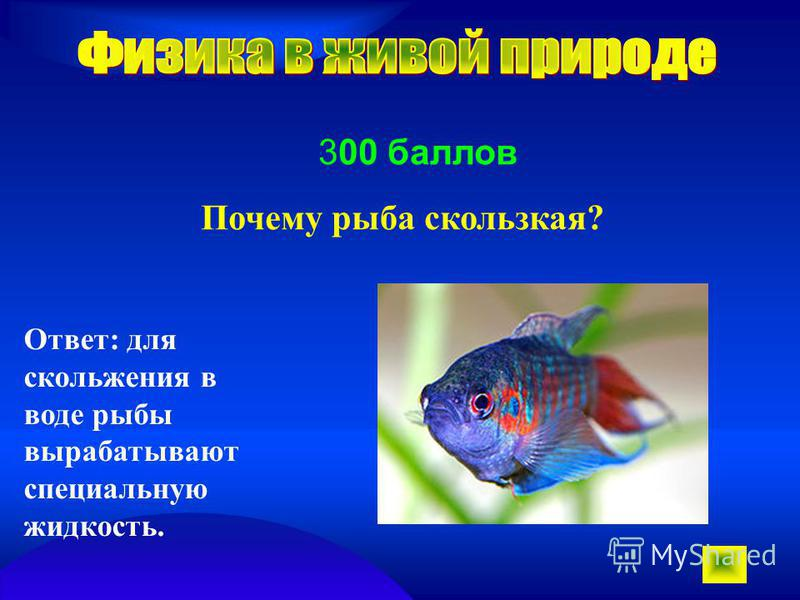 300 баллов Почему рыба скользкая? Ответ: для скольжения в воде рыбы вырабатывают специальную жидкость.