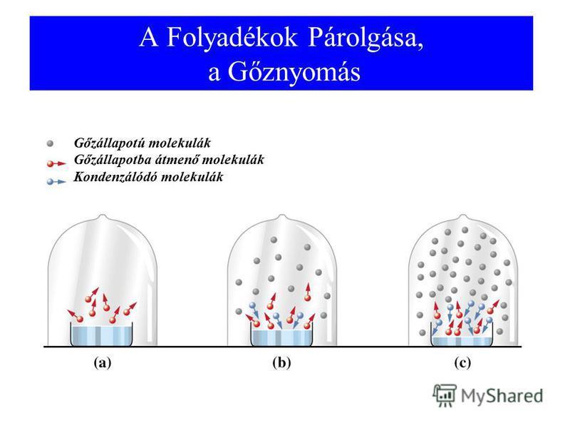 A Folyadékok Párolgása, a Gőznyomás Gőzállapotú molekulák Gőzállapotba átmenő molekulák Kondenzálódó molekulák