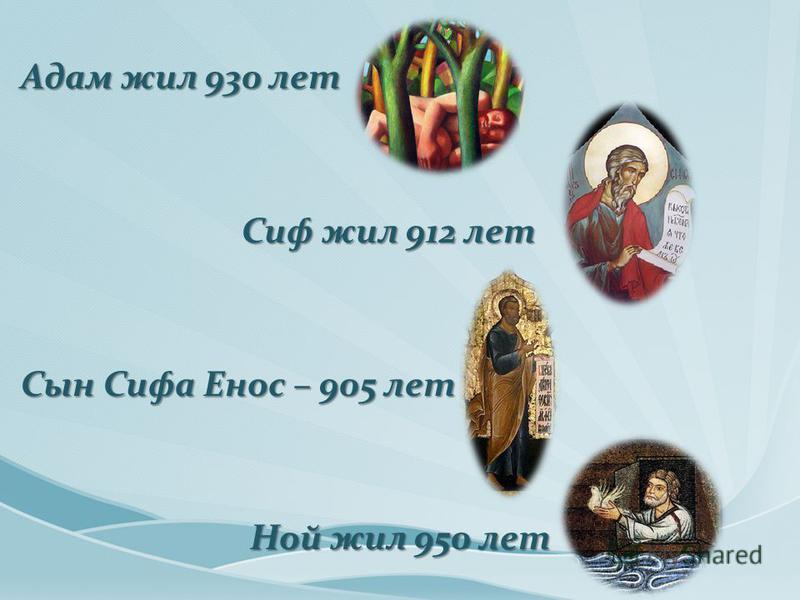 Адам жил 930 лет Сиф жил 912 лет Сиф жил 912 лет Сын Сифа Енос – 905 лет Ной жил 950 лет Ной жил 950 лет