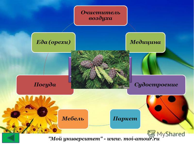 Мой университет - www. moi-amour.ru Очиститель воздуха Медицина СудостроениеПаркет МебельПосуда Еда (орехи) КЕДР