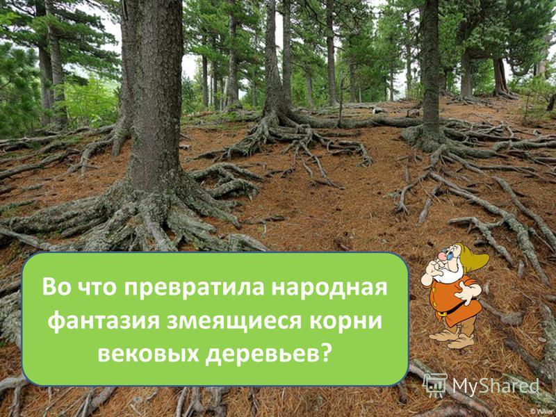 Во что превратила народная фантазия змеящиеся корни вековых деревьев?